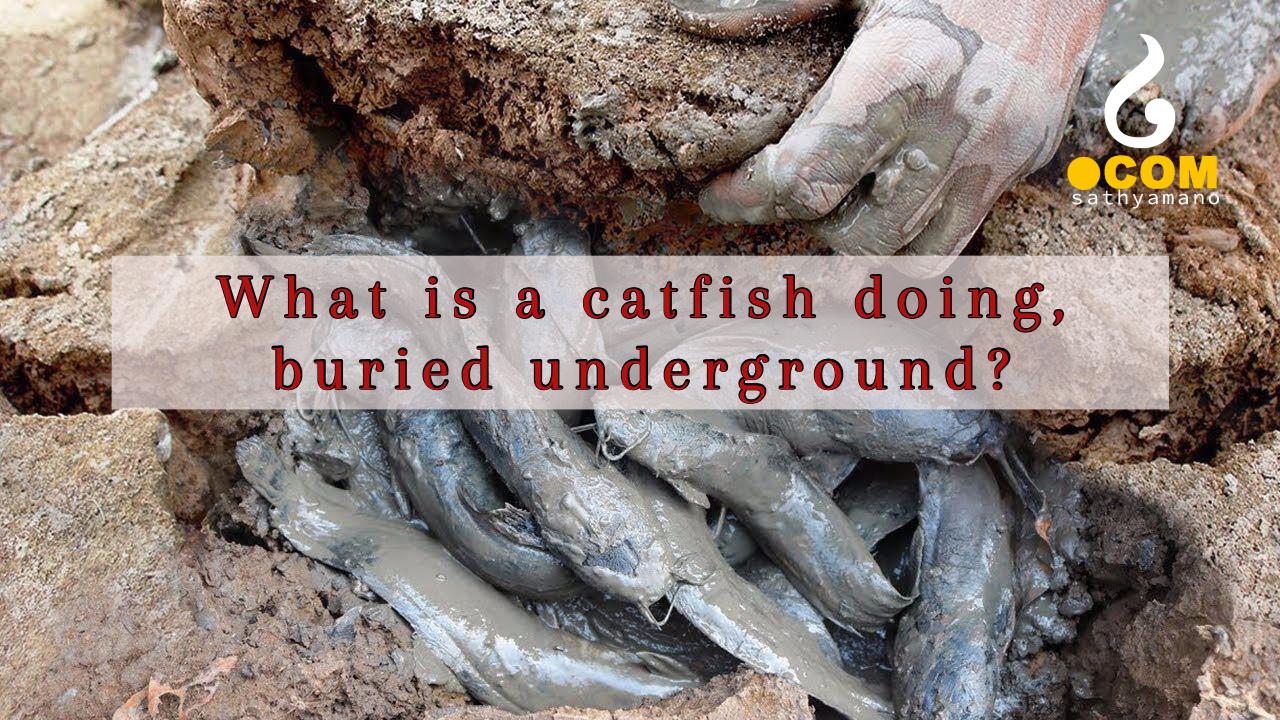 Underground dry land fishing- Whats the secret?
