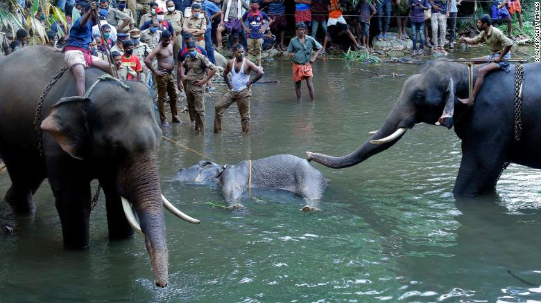 The Truth behind Elephant death in Kerala
